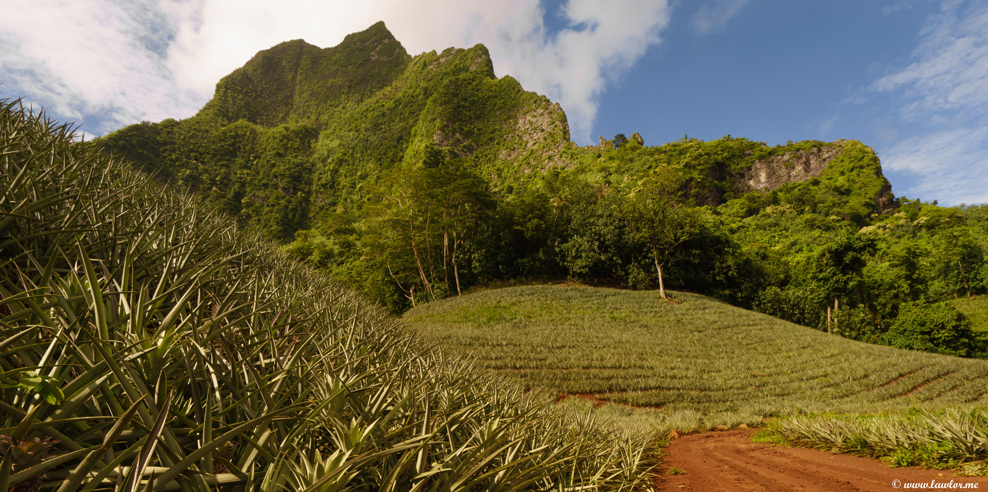 Pineapple Farm, Moorea - French -Polynesia, Free Landscape Photography, free landscape photos, free nature images, free HD images, free high definition stock images, free stock images download, desktop background, desktop wallpapers, free screensaver, landscape photography