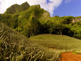 Pineapple Farm, Moorea – French-Polynesia